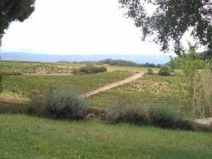 Aussicht Weinberge